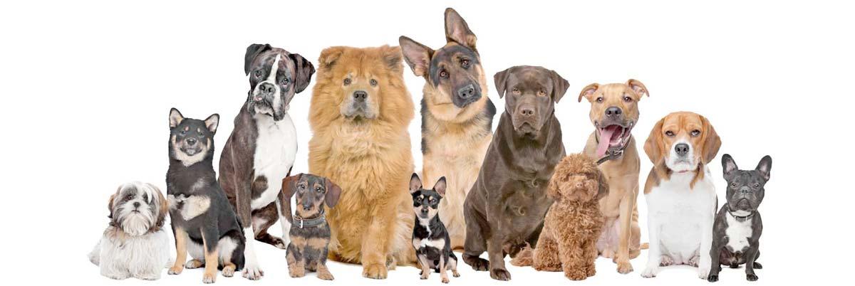 Mayobridge Dog Kennels in Newry